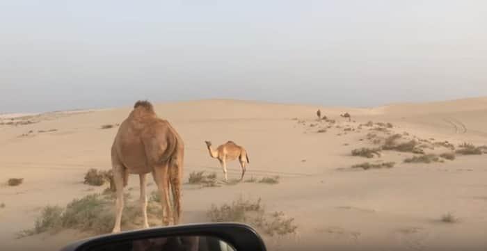 Aventuras privadas en el desierto de Qatar