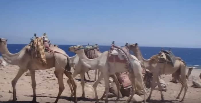 Excursión privada en el desierto Qatar